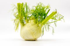 Aromatic fresh fennel with leaves and green stems royalty free stock images