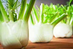 Fennel and ground Stock Photo