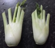 Fennel hands Stock Image