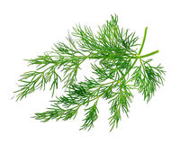 Fennel herbs Stock Photography