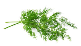 Fennel herbs Stock Photos