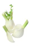 Fennel Stock Photos