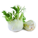 Fennel isolated on white Royalty Free Stock Photos