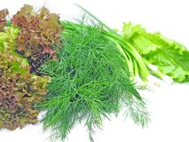 Fennel lettuce onion for vegetable salad Stock Images