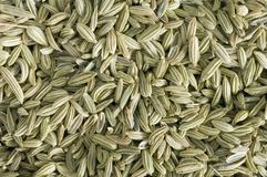 Fennel macro. Macro close-up of a pile or mound of whole green striated or striped fennel seeds whole seeds or showing the texture of the spice while fennel is stock image