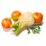 Fennel, mandarins and arugula. Handmade watercolor painting illustration. On a white background Royalty Free Stock Photography