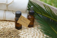 Fennel oil. A bottle of fennel essential oil. Fennel grains in the background Stock Photos