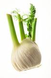 Fennel Stock Photography