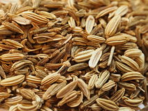 Fennel. Pile of dried fennel spice stock photos