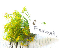 Fennel plant Royalty Free Stock Photos