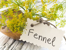 Fennel plant Royalty Free Stock Image