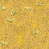 Fennel Plants And Seeds Seamless Pattern. Vector seamless pattern with fennel plants and seeds in warm colors Royalty Free Stock Photography
