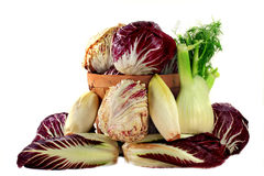 Fennel and Radicchio ingredients for gourmet salad Stock Image