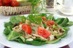 Fennel Salad Stock Image