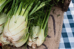 Fennel for sale at a farmers market Royalty Free Stock Photos