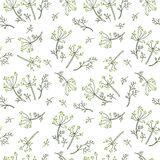 Fennel seamless pattern on white field Royalty Free Stock Photography