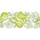 Fennel vector  pattern. Fennel seamless vector pattern on white background Royalty Free Stock Images