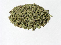 Fennel Seed 1. Fennel seed Royalty Free Stock Images