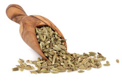 Fennel Seed Stock Image