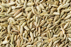 Free Fennel Seed Royalty Free Stock Photo - 35057905
