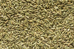 Fennel Seed Background Royalty Free Stock Images