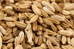 Fennel seeds. Closeup take of fennel seeds, food background Royalty Free Stock Images