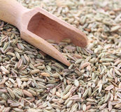 Fennel seeds. Some dried fennel seeds with a spoon Royalty Free Stock Image
