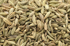 Fennel seeds. Macro closeup of pile of raw fennel seeds Royalty Free Stock Photo