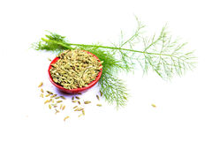 Fennel seeds. In bowl on white background Stock Photo