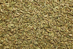 Fennel seeds background Stock Images