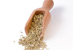 Fennel seeds in the bailer. Full focus on fennel seeds royalty free stock photography