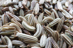 Fennel seeds close-up Royalty Free Stock Images