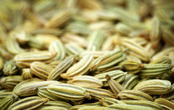 Fennel seeds. Closeup of some fresh fennel seeds stock photo