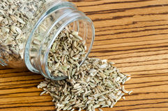 A Fennel seeds Royalty Free Stock Photos
