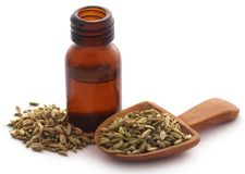 Fennel seeds with essential oil. In a bottle over white background Stock Image