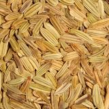 Fennel seeds. Closeup in a kitchen Royalty Free Stock Photography