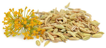 Fennel seeds with flowers. Over white background royalty free stock image