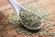Fennel seeds. Fennel or fennel seeds are highly aromatic and flavorful herb with culinary and medicinal uses . It is used as a spice and possesses a sweet taste Stock Image