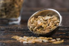 Fennel Seeds. A teaspoon of dried fennel seeds Royalty Free Stock Photography