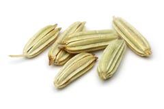 Fennel seeds. On white background. Macro shot stock photo
