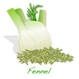 Fennel seeds on white background. Fennel root and seeds  on white background Stock Photo