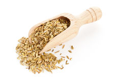 Fennel seeds on wooden scoop Stock Photography