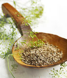 Fennel seeds in wooden spoon and fresh flowers of dill Royalty Free Stock Photography