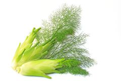 Fennel. Three fennel bulbs isolated in front of white background Stock Photography
