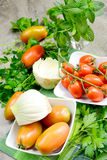 Fennel and tomatoes Stock Image