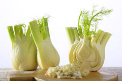 Fennel. Two fennels and a half with fennel croutons Stock Photos