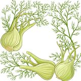 Fennel vector  frame. Fennel plant vector frame on white background Stock Photo