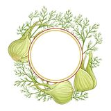 Fennel vector  frame. Fennel plant vector frame on white background Stock Image