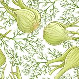 Fennel vector  pattern. Fennel plant vector pattern on white background Stock Images