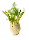 Fennel vegetable Stock Photos